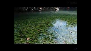 Аквариумные растения в природе 3, Аквариумные рыбки в природе 3
