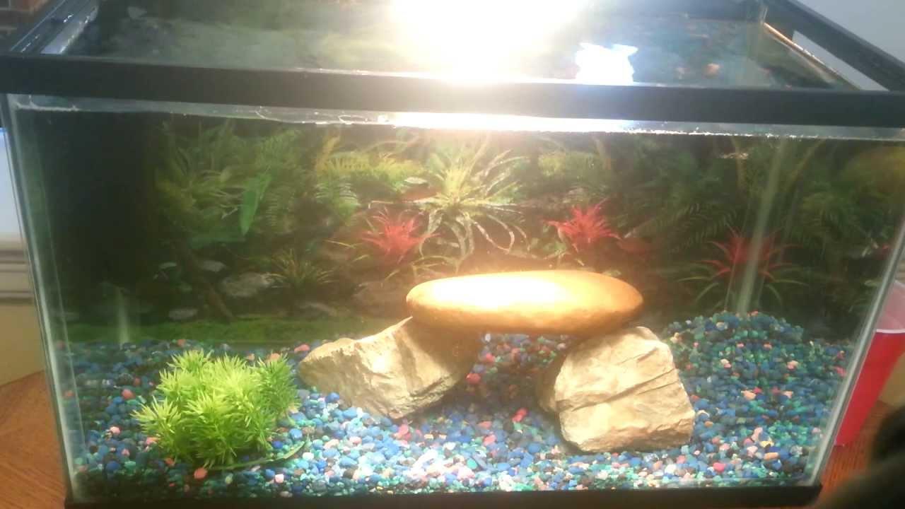 Freshwater aquarium fish water change - Freshwater Aquarium Fish Water Change