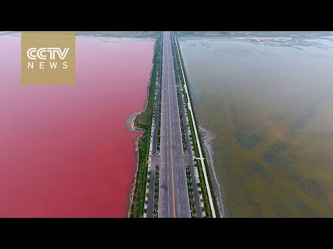 Footage: Algae color 'China's Dead Sea' in red and green