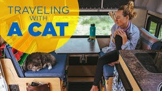 Traveling Full Time with a Cat