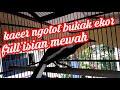 Kacer Ngotot Bukak Ekor Isian Mewah  Mp3 - Mp4 Download
