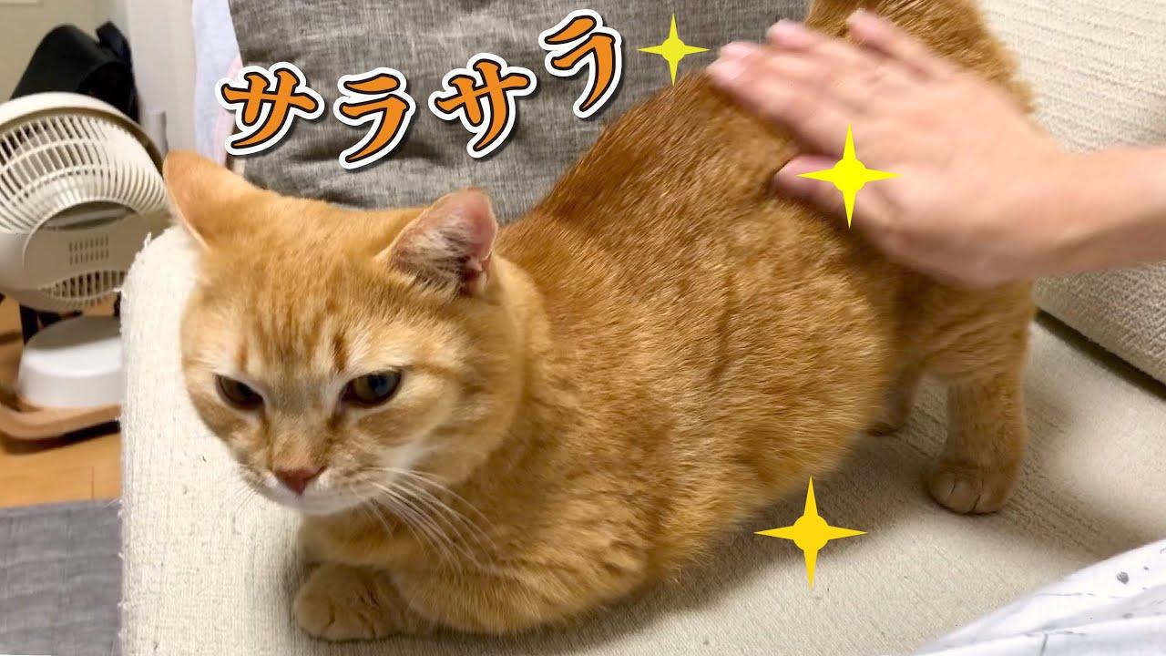 猫をシャンプーしたら現れるサラサラママから逃げられない!!?