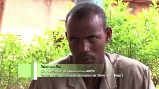 LA TECHNOLOGIE DES BLOCS MULTI-NUTRITIONNELS AU NIGER