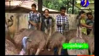V and V emu Farm Haritha keralam part 1 Mob: +91 9744441093 Web: www.vandvemufarm.com