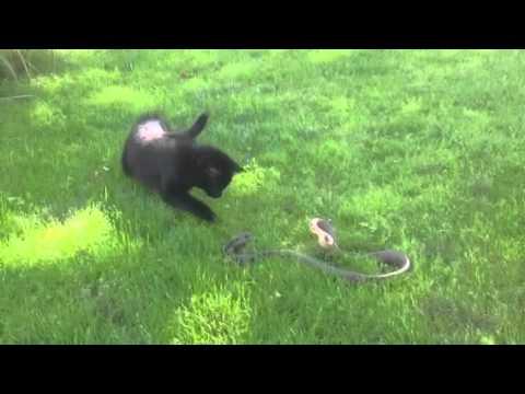 Eloigner les animaux du jardin doovi - Eloigner les chats du jardin ...