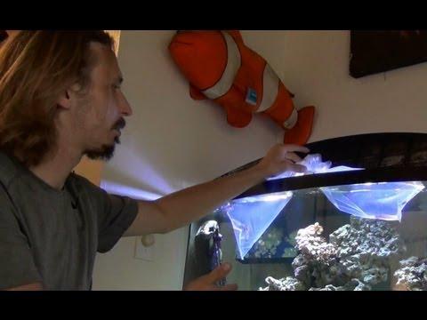 Adding Fish To An Established Aquarium