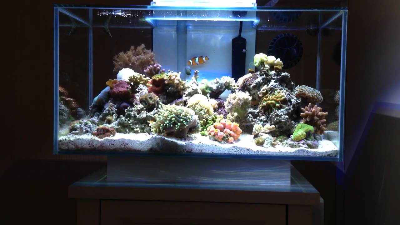 Fluval Edge Nano Reef YouTube