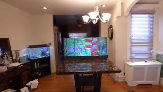 TV LIKE WALLPAPER PROJECTION SCREEN THAT MAKE YOUR PROJECTOR LOOK AMAZING!