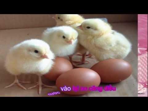 Đàn gà trong sân - nhạc thiếu nhi (Little chicken cute song) [odkhi]