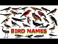 Learning birds names for nursery class | Pre School Learning For kids