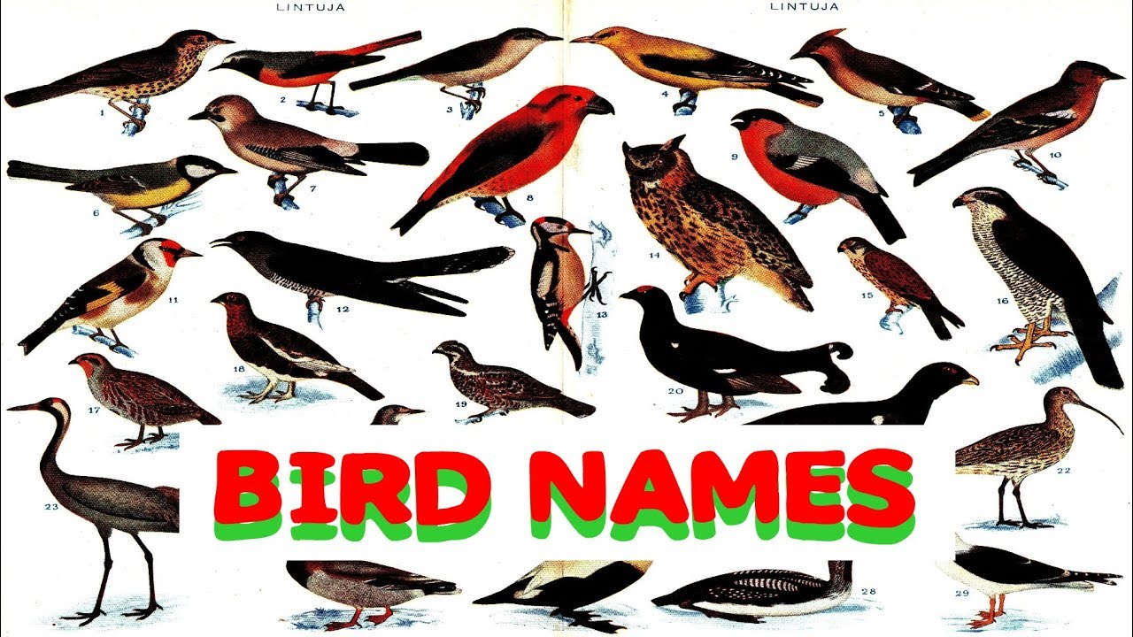 Learning Birds Names For Nursery Cl Pre School Kids