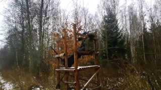Охота на благородного оленя видео