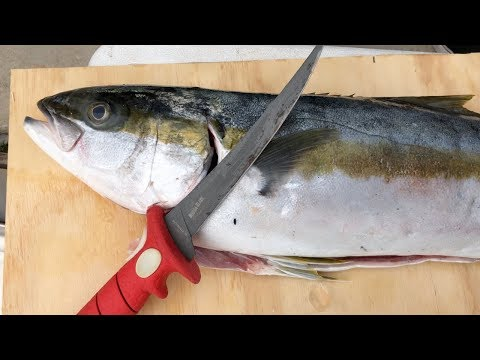 How To Fillet And Prepare Yellowtail