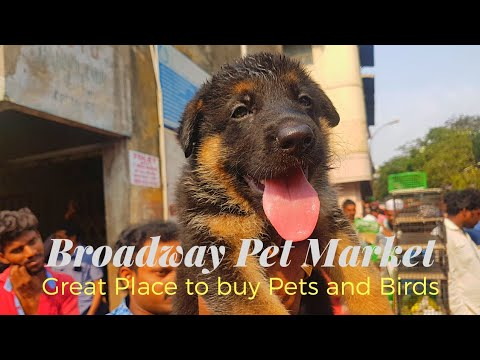 Review and Buying Tips in Broadway Pet market... Casual talk starts from 9:00...