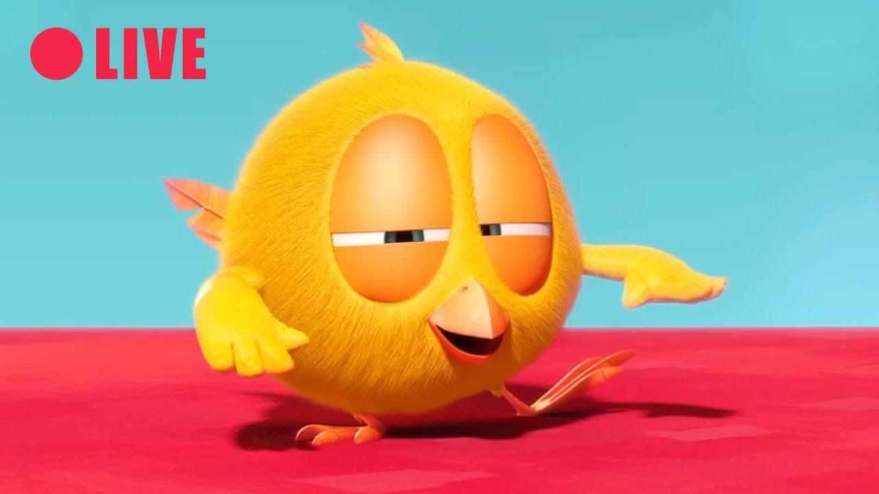 LIVE 🔴 | WHERE'S CHICKY | ¿Dónde está Chicky? Dibujos Animados en directo en español !