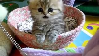חתולונובלה - פרק ראשון
