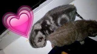 Милые котята, маленькие кошки открыли глаза? (vivavideo)