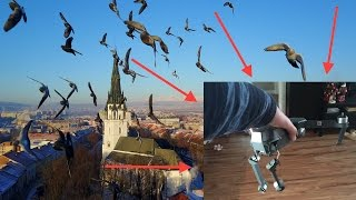 Birds ATTACKED my drone! The best Dji Mavic crash ever!
