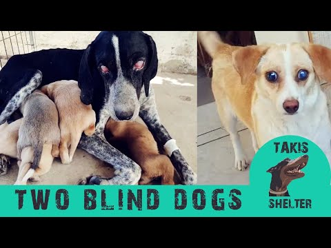 The Rescue Of Two Blind Dogs - Emma & Blossom - Takis Shelter