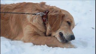 Гороскоп в год Собаки