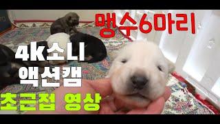 4K소니액션캠 촬영영상!!!/6남매 맹수들 초근접 촬영…
