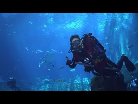 Dream Job: A Day in the Life of Our Divers by Aquarium Love