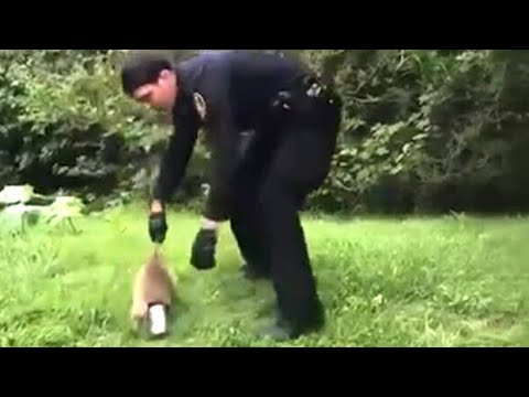 Officer makes many attempts to rescue raccoon stuck in tin can