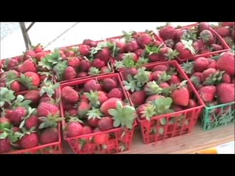 Sunset Valley Farmers Market
