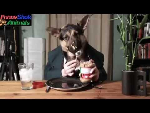 Видео приколы.Приколы про животных, смешные кошки, приколы с кошками СМОТРИ!