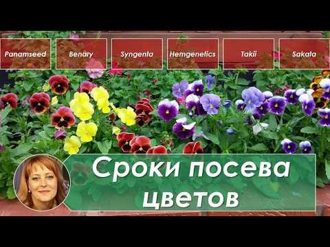 Сроки посева цветов на рассаду