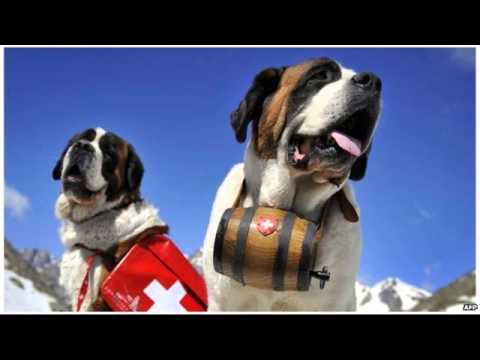swiss-resort-zermatt-ends-st-bernard-dog-tourist-photos