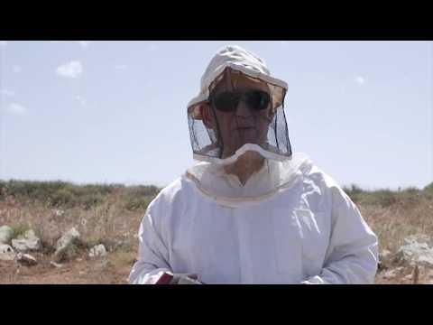 Пчеловодство. Отводки и двухрамочные изоляторы. Серия ограничение матки на медосборе 1