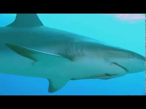 Тайны планеты Земля. Акулы : Властелины подводного мира