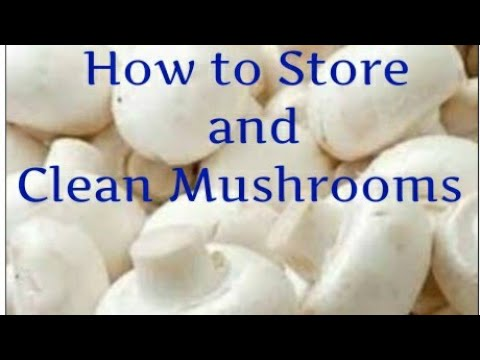 How to Store Extra Days And Clean Mushrooms at home
