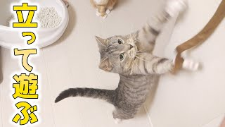 cute cats playing with their favorite toy happily