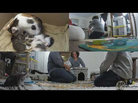 Wingdings and Garamond's Adoption