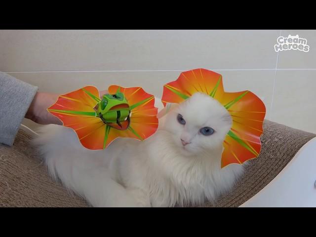 라라 꽃이 피었어요