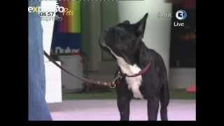Bobtail :Karis Bryen Animal behaviourist (27.02.2012)