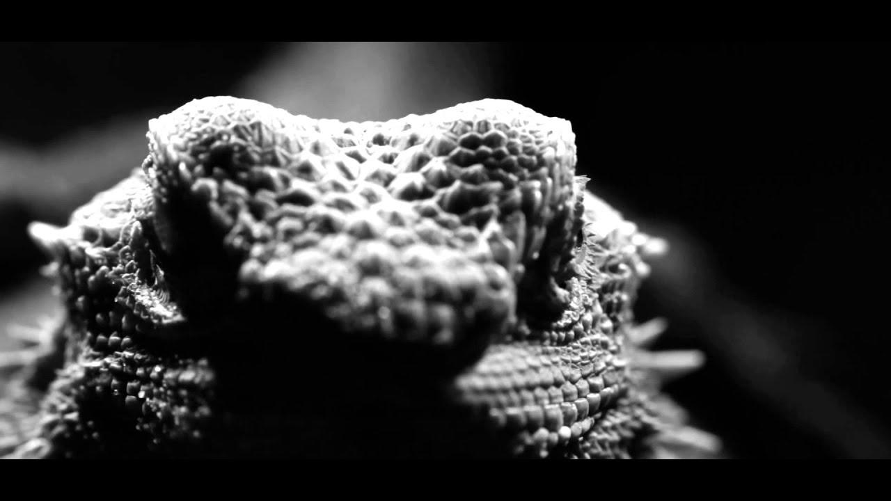 Kellner — Kinda Wild (Official Video)
