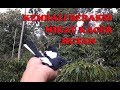 Pikat Burung Kacer Bikin Ketagihan Banyak Banget Burung Kacer Liar  Mp3 - Mp4 Download