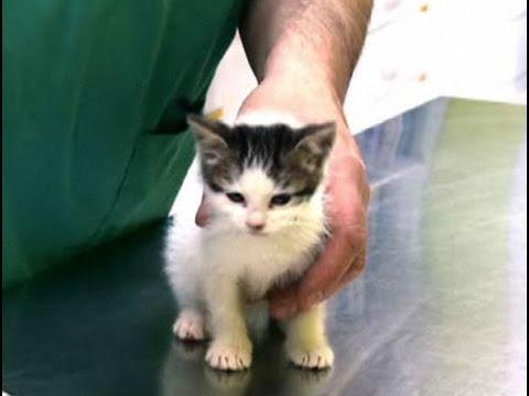 Medicamentos para lombrices en gatos