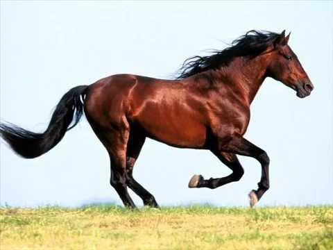 Лошади - YouTube