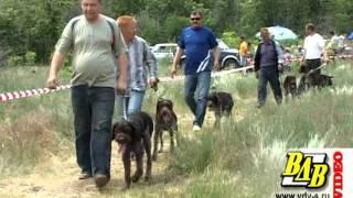 38-я областная выставка охотничьих собак, Волгоград