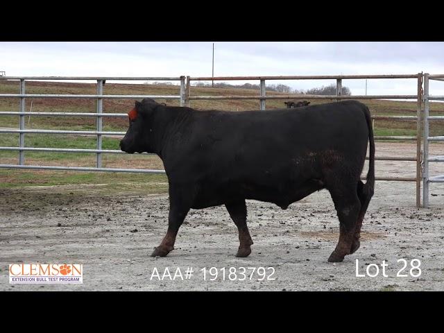Clemson Extension Bull Test Lot 28