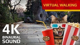 Virtual walking for indoor Cats and Cat owners (Cat point of view) - Bengbu City in China