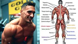 My Favorite WORKOUT EXERCISES   Shredded & Muscle Gain
