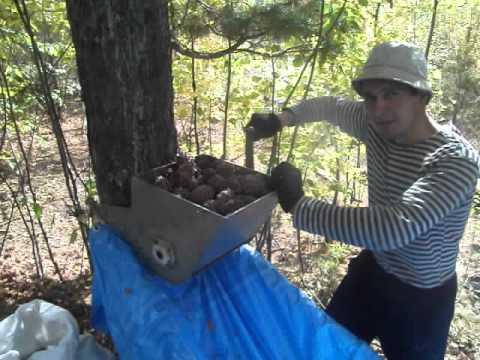 Самодельная дробилка для грецких орехов грохот гис в Брянск