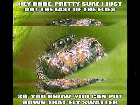 hqdefault the sad world of the misunderstood spider youtube,Misunderstood Spider Meme