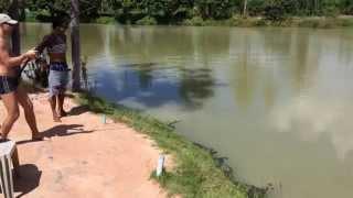 Рыбалка в Тайланде, Озеро Монстров (Amazon Fishing Park)