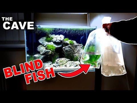 """""""the-cave""""-aquarium......🆆🅴🅸🆁🅳-*blind*-fish-added!"""